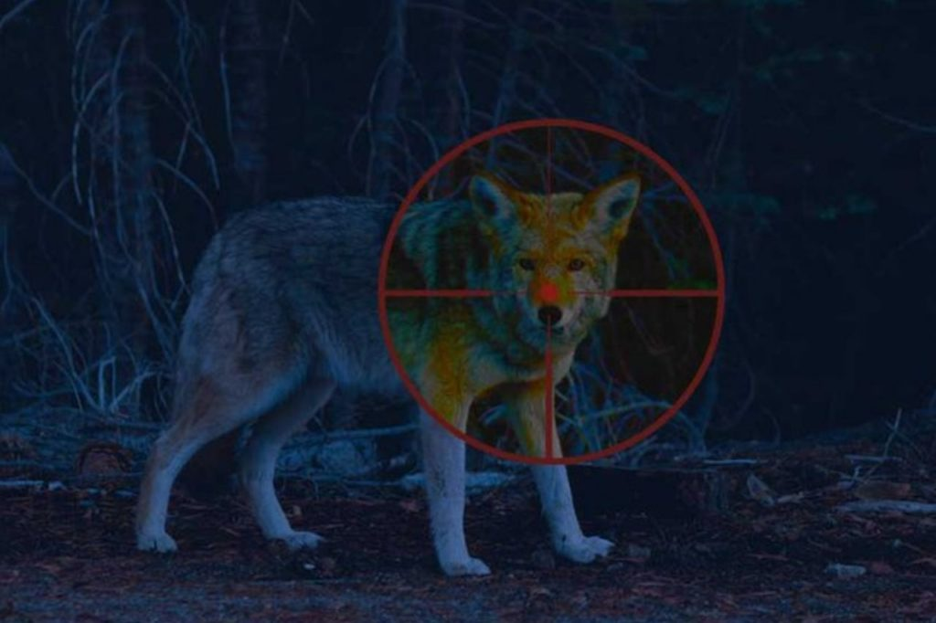 Night Vision Scopes For Coyote Hunting